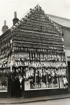 Butcher in High Wycombe, England, c. 1938. Christmas turkeys