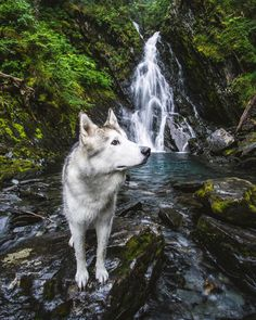 """21k Likes, 45 Comments - Loki (@loki_the_wolfdog) on Instagram: """"Photography is the story I fail to put into words. ~Destin Sparks"""""""