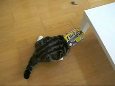 Maru vs. diet box