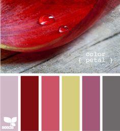 color petal  flower petal is the perfect color for the blue scheme LR i plan