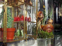 TERRAROOM | Les p'tits coins nature: atelier / Dans l'atelier #2 -> atelier, terrarium, végétal, succulentes, greenlife, TERRAROOM atelier, home, creation, décoration, tillandsia, Fille de l'air, orchidées, succulove, TERRAROOM studio, plantes addict, ma déco à moi, zen, la vie est belle, collection de trésors, garder ses souvenirs de vacances, terrarium TERRE, terrarium MER, urban jungle, fleurs sèches, recycler les coquilles d'escargots, namaste, workplace