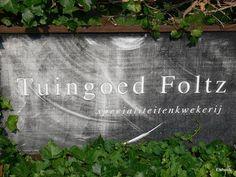 Tuingoed Foltz - Flip - Picasa Web Albums