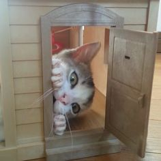 "Kitty Photo From @h.o.p.s: ""kitten's house"""