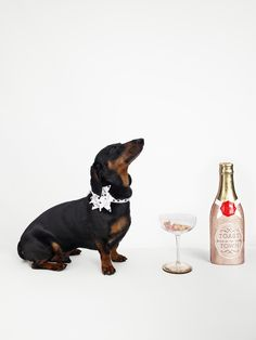 """monster is a dachshund who, despite his name is (mostly) very well-behaved. he's short on legs, long on personality and has been following derek blasberg around for years. and the quality he most likes in a present? """"bacon."""""""