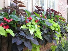(part sun)      Sun Coleus  Dragonwing Begonia  Penta  Star Zinnia  Sweet Potato Vine