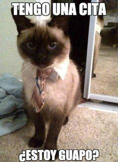 Un gato muy chistoso va a ir a una cita y pregunta cómo se ve