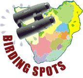 Magoebaskloof -Woodbush and Swartbos forest Reserves - Birding Spot Wiki