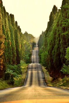 EastmanHouse @EastmanHouse  · 5m5 minutes ago   View translation  Sunset on a road in #Bolgheri, #Italy #Photo by Tiziano Pieroni #Friends #Smile #Dream #Sleep #Love & #RT