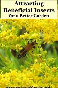 We'll talk about what beneficial insects do in the garden, common species, host plants and tips for attracting good bugs to your garden. Planting Raised Garden Beds, Garden Pests, Insect Eggs, Butterfly Weed, Fall Vegetables, Beneficial Insects, Organic Gardening Tips, Easy Garden, Garden Ideas