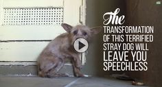 The Transformation Of This Terrified Stray Dog Will Leave You Speechless! <3
