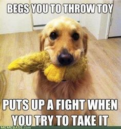 My dog does this since he was a puppy :)