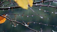 drip, drip, drop, little april showers