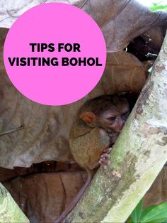 Heading to the Philippines? Read my tips on visiting Bohol, where to see tarsiers, chocolate hills and which beach to choose. Bohol Philippines, Philippines Travel, Travel 2017, Asia Travel, Travel Articles, Travel Photos, Travel Tips, Amazing Destinations, Travel Destinations