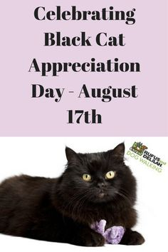 Many people stay away from getting or adopting a black cat thinking they bring bad luck, however, that is just a myth.  Check out our NEW blog Celebrating Black Cat Appreciation Day - August 17th.