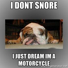 british bulldog memes - Google Search