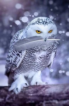 "Snow owl * * "" Not one step closer... dis feather is mine...yoo thought yoo wuz gonna do some pluckin'. On yer way, big pink monkeys."""
