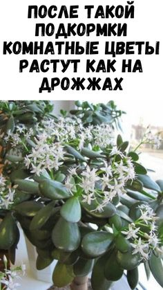 Landscape Design, Life Hacks, Projects To Try, Sad, Gardens, Cactus Plants, Succulents, Plant, Flowers
