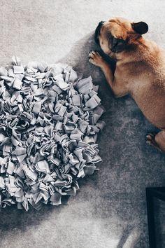 Schnüffelteppich für Hunde selber machen, Hunde DIY Anleitung, Hundespielzeug selber machen, Hunde Tipps und Tricks, Leben und Alltag mit Hund, Hundeblogger Österreich, www.thepawsometyroleans.com