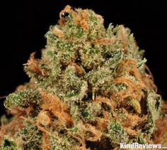 """This was clearly a well-grown sample of this strain, which we've seen quite a bit due to its overall popularity in the medical scene.  The mixed light greens and fluffy, creamy orange pistils gave it a classic look, while the abundant trichomes hinted that it has more to offer than some of those """"classic"""" strains.  We were impressed with the well-preserved nature of the trichomes, the harvest timing (perfect blend of clear cloudy, and amber), and the post-harvest care in general, though…"""