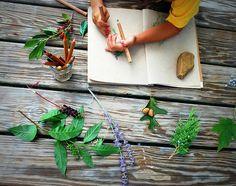 great nature study blog
