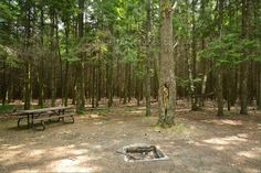 Sibbald Point Provincial Park, East Campground, Camping in Ontario Parks Ontario Parks, Outdoor Furniture, Outdoor Decor, Camping, Plants, Campsite, Flora, Plant, Campers