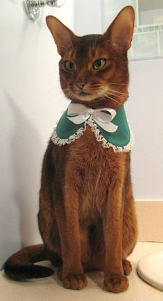 Lace edge St Patricks Day Baby collar for cat, choose green or all white. $26.00, via Etsy.