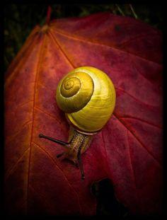nine inch snail by *baspunk on deviantart    Quoted from: http://baspunk.deviantart.com/art/nine-inch-snail-99959793