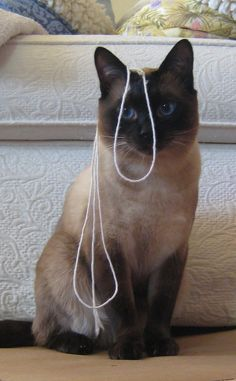 Make sure that when your done playing with your cat and string you put the string up so your cat can't chew on it and swallow it. String can be fatal to cats!
