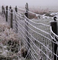 #mist #fogg #vorst #frost #winter #Bolsward #Friesland