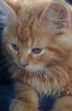 Long haired kitten by Kimberly Williams on 500px