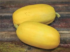Spaghetti Squash; (C. pepo) 88 days This is the popular squash with stringy flesh that is used like spaghetti. Introduced by Sakata Seed Co. of Japan in 1934. May have originated in China.