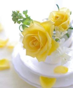 How to Plant Potted Flowers Outdoors in the Soil : Garden Space – Top Soop Good Morning Love You, Good Morning Flowers, Flower Arrangements Simple, Beautiful Rose Flowers, Flower Lights, Rose Cottage, Yellow Cottage, Flower Images, Garden Spaces