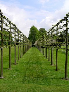Espaliered trees - trees grown this way would make an awesome living hedge and productive too.