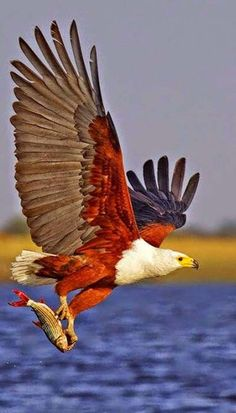 Great Totally Free beautiful birds of prey Ideas For a parrots of animals professional photographer, a vey important issue most complain about may be the unfo Kinds Of Birds, All Birds, Birds Of Prey, Angry Birds, Pretty Birds, Beautiful Birds, Animals Beautiful, Exotic Birds, Colorful Birds