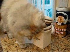 Comme des bêtes : Top 10 des bêtises faites par vos animaux en votre absence ! - Insolite - Wamiz