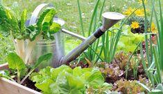 Réussir son potager et profiter de belles récoltes, nécessite d'adopter le bon calendrier ! Mais aussi de suivre les conseils donnés pour effectuer les bons gestes de culture, réaliser les travaux nécessaires, tout au long de l'année. Car à chaque mois dans le potager, ou du moins à chaque saison, les opérations se suivent et ne se ressemblent pas, même si elles se mettent toutes au service de légumes sains et gourmands. Suivre le calendrier du potager, c'est la promesse de récolt...