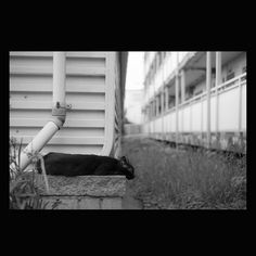 https://flic.kr/p/vgReYy   Cat June 2015  #cat #smallcats #blackandwhitephotography
