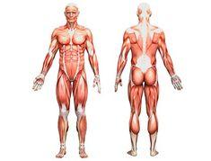 7 лекций по анатомии рисования человека