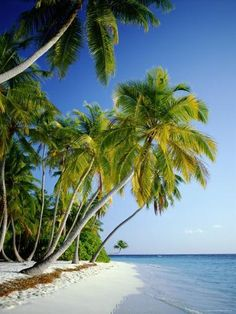 - holy shit - marvelous - Photographic Print: Palm Trees and Tropical Beach, Maldive Islands, Indian Ocean by Steve Vidler : Romantic Beach Photos, Beautiful Beach Pictures, Beach Images, Beautiful Beaches, Romantic Travel, Big Island Hawaii, Island Beach, Small Island, Palm Tree Island