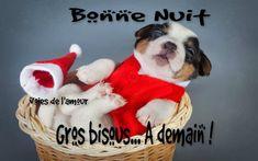 Bonne Nuit. Gros bisous... À demain ! #panier chien drole marrant costume noel panier sommeil dodo