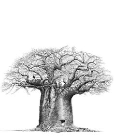This still life pencil drawing called 'Hornbills' features a beautiful, African Baobab tree with a hornbill bird. Another beautiful drawing by Bowen Boshier Tree Drawings Pencil, Tattoo Drawings, Crayons Pastel, African Tree, African Tattoo, Baobab Tree, Vides, South African Artists, Copper Art
