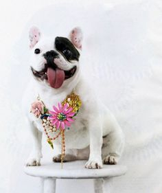 What a face! photography displays, pink flowers, anim, french bulldogs, pet, frenchi, necklac, puppi, happy dogs