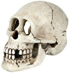 Yorick Life Like Human Skull Aquarium Fish Cave Fish Tank Ornament