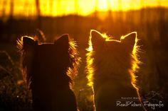 Chihuahua~Sunset