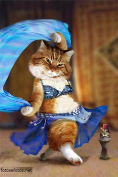 que fofo!!! Afinal os gatos tambem dançam :) LOL