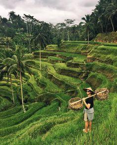 Tegalalang Rice Terrace Ubud BALI)