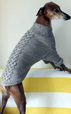 Six Times Greyhounds Wore Sweaters Better Than You Six Times Greyhounds Wore Sweaters and Looked Better Than You Knitted Dog Sweater Pattern, Dog Coat Pattern, Knit Dog Sweater, Italian Greyhound Clothes, Knitting Patterns Free Dog, Free Knitting, Large Dog Sweaters, Dog Jumpers, Grey Hound Dog