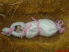 Kucing adalah terjemahan dari cattus (bahasa Latin). Kucing adalah hewan karnivora dan biasanya menjadi binatang peliharaan. Itu adalah simbol kebebasan di Roma Kuno dan Mesir. Kucing memiliki fitur luar biasa. Dari kemampuan yang tajam untuk melihat dalam gelap pada kemampuan untuk menangkap mangsanya seperti macan tutul, kucing memiliki karakteristik yang luar biasa jang tersembunyi di dalamnya.