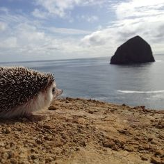 …contemplating philosophical paradoxes… | The Fantastic Adventures Of Biddy TheHedgehog