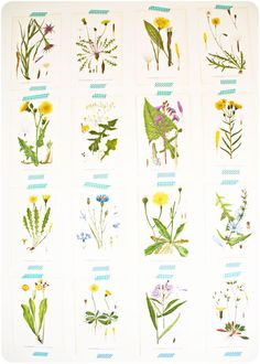 Pages from a vintage botanical book taped on the wall with washi tape.